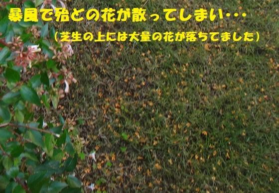 f0121712_23321726.jpg