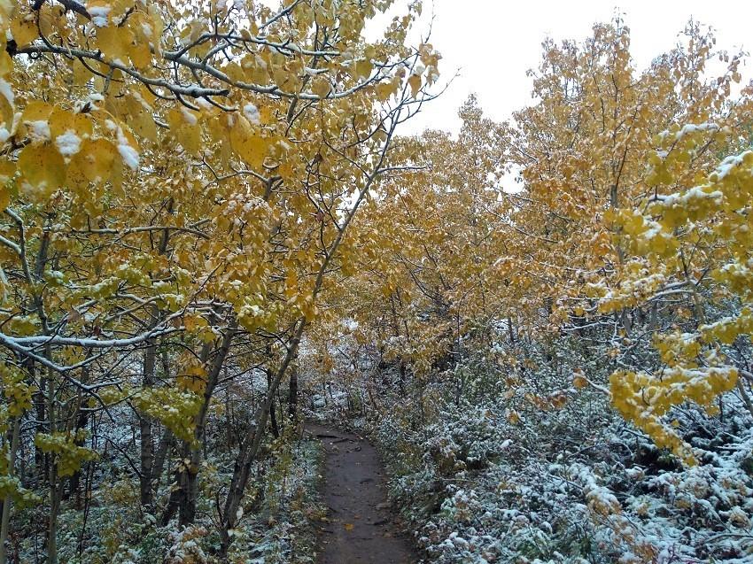 雪の黄葉 満喫ハイキング_d0112928_01495796.jpg