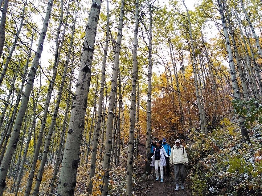 雪の黄葉 満喫ハイキング_d0112928_01510891.jpg