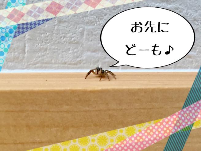 f0183846_16162087.jpg