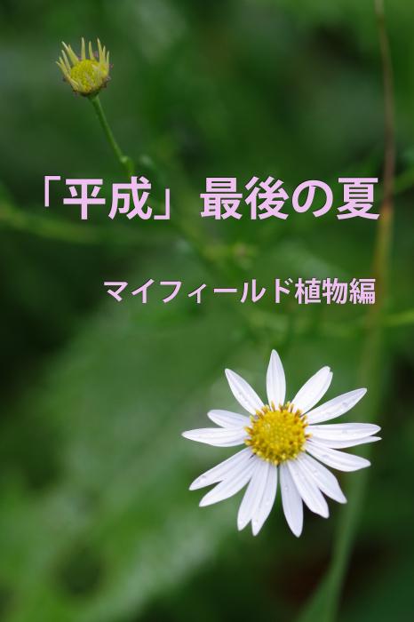 b0144049_17563360.jpg