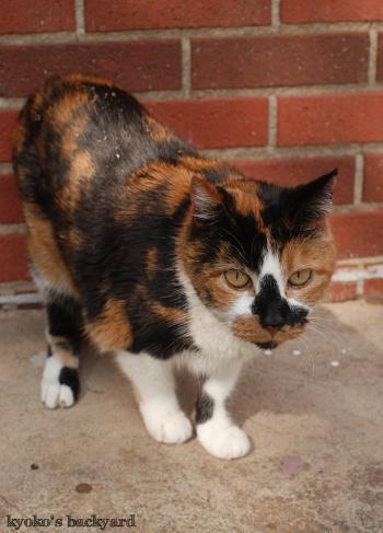 猫又記念日もとい20歳の誕生日♪_b0253205_05312289.jpg