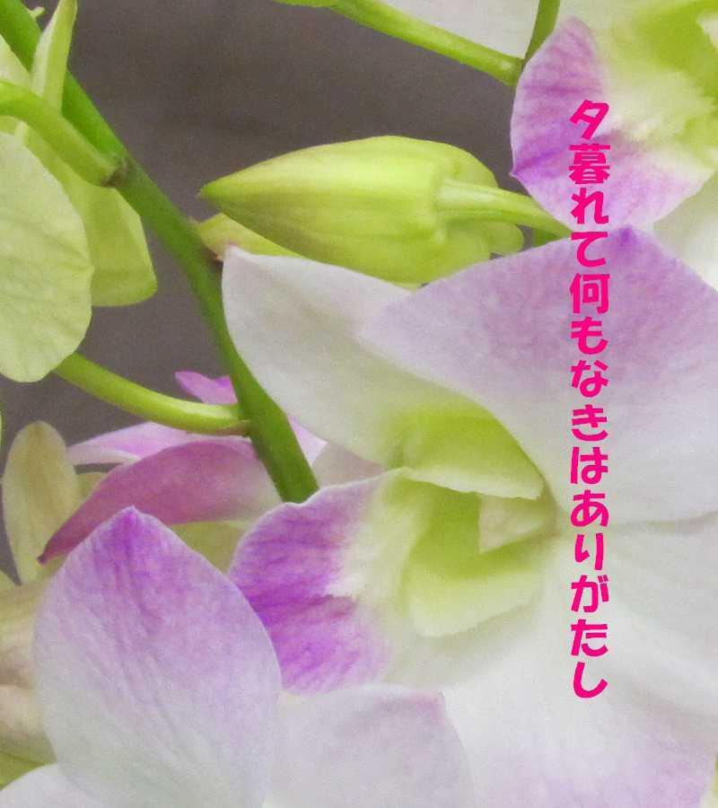 f0117041_06110733.jpg