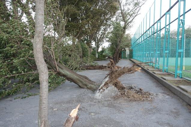 台風24号の置き土産_e0232277_15195851.jpg