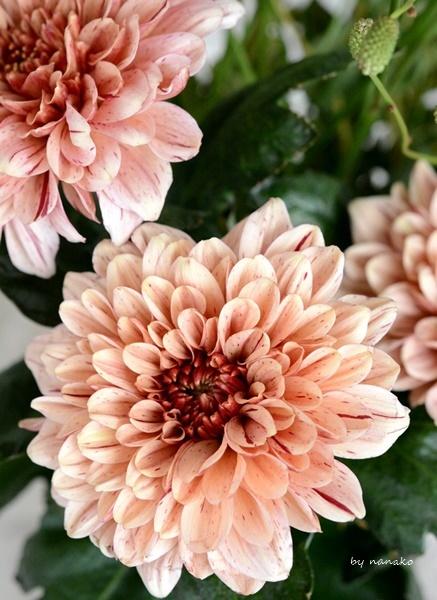 秋の花を飾る。_c0364500_01155900.jpg