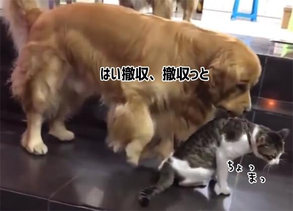 からくれない動物 124_c0072801_9224638.jpg