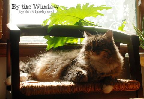 窓辺で日向ぼっこ_b0253205_08233359.jpg