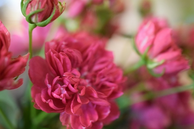 黄色いコスモスに薔薇の暦♪_e0128909_10304485.jpg