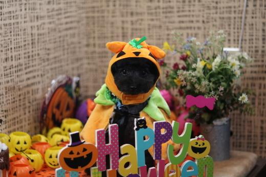 10月1日にご来店のワンちゃんです!_b0130018_08494275.jpg