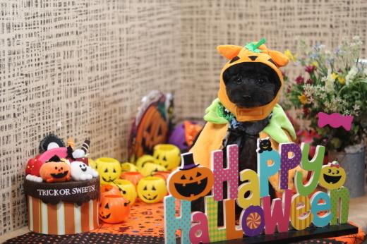10月1日にご来店のワンちゃんです!_b0130018_08500906.jpg