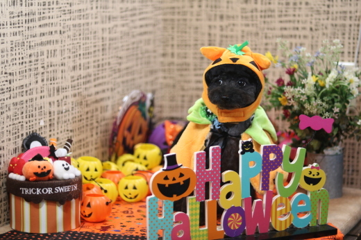 10月1日にご来店のワンちゃんです!_b0130018_08505063.jpg