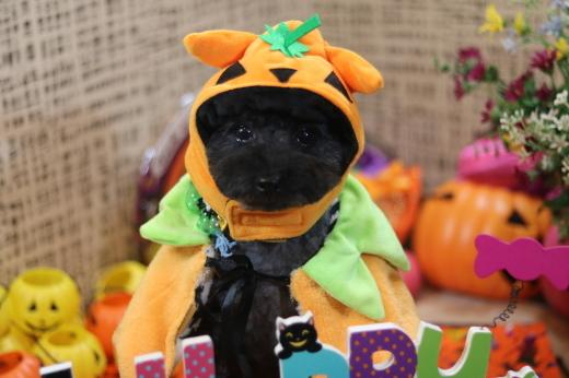 10月1日にご来店のワンちゃんです!_b0130018_08510971.jpg