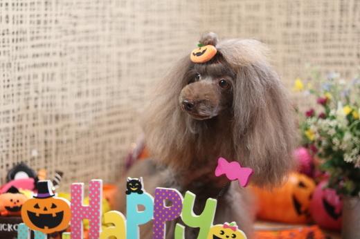 10月1日にご来店のワンちゃんです!_b0130018_08554915.jpg