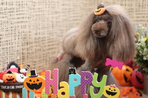 10月1日にご来店のワンちゃんです!_b0130018_08564033.jpg