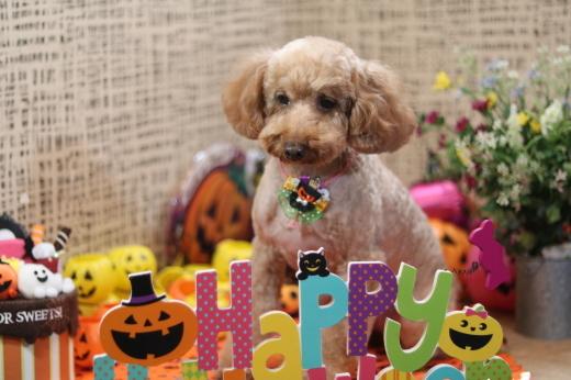 10月1日にご来店のワンちゃんです!_b0130018_20543521.jpg