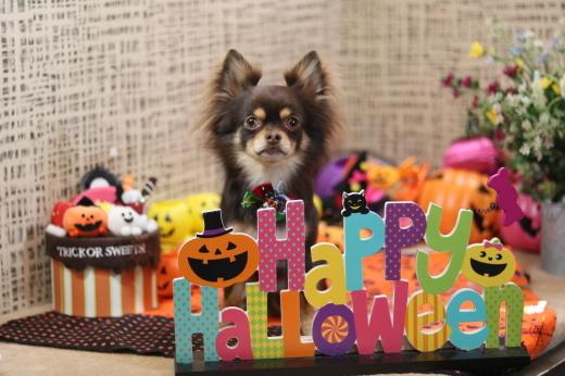 10月1日にご来店のワンちゃんです!_b0130018_21014012.jpg