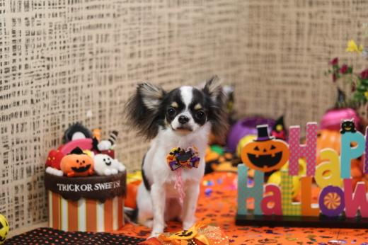 10月1日にご来店のワンちゃんです!_b0130018_21084042.jpg