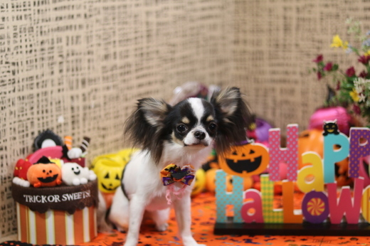 10月1日にご来店のワンちゃんです!_b0130018_21175431.jpg
