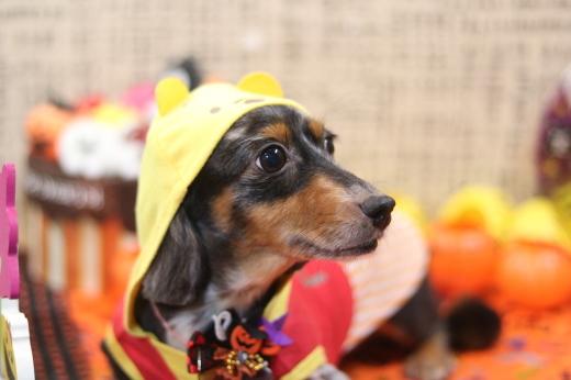 10月2日ご来店のワンちゃんです!!_b0130018_21520047.jpg