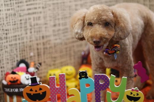 10月1日にご来店のワンちゃんです!_b0130018_22183411.jpg