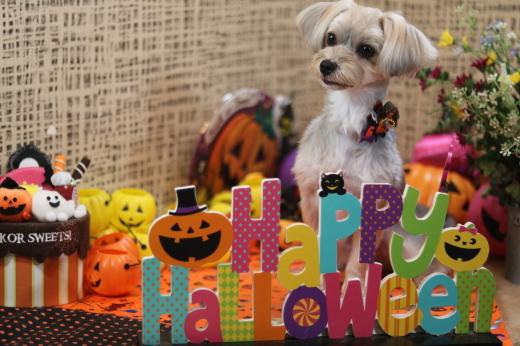 10月1日にご来店のワンちゃんです!_b0130018_22214869.jpg