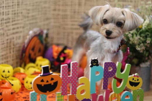 10月1日にご来店のワンちゃんです!_b0130018_22223180.jpg