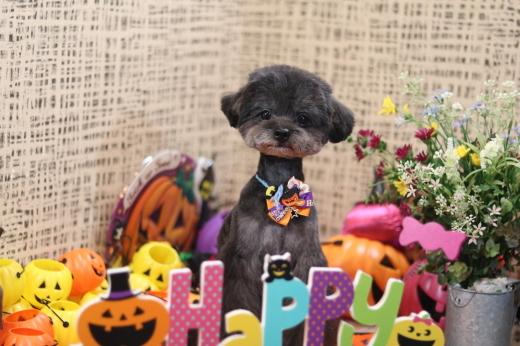 10月1日にご来店のワンちゃんです!_b0130018_22251498.jpg