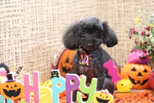 10月2日ご来店のワンちゃんです!!_b0130018_13210597.jpg