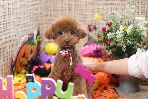 10月2日ご来店のワンちゃんです!!_b0130018_13431400.jpg