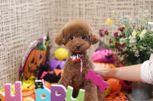 10月2日ご来店のワンちゃんです!!_b0130018_13433248.jpg
