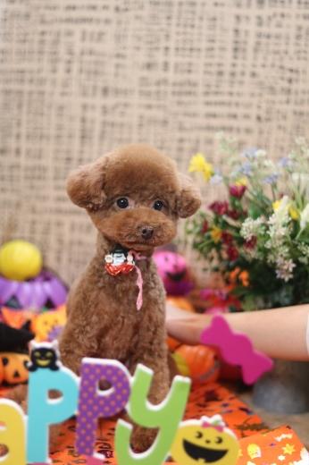 10月2日ご来店のワンちゃんです!!_b0130018_13435007.jpg