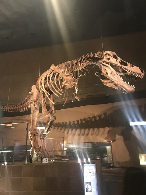 恐竜?!_d0177220_15094138.jpg