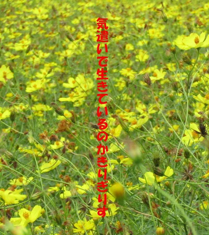 f0117041_05252276.jpg