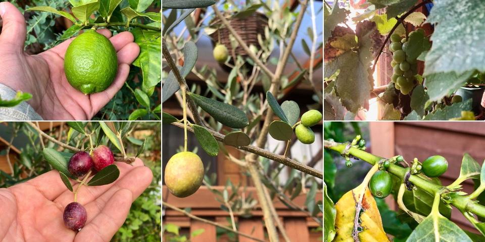 Lemon, Olive, Coffee,  Muscat♪_c0123363_10163784.jpg