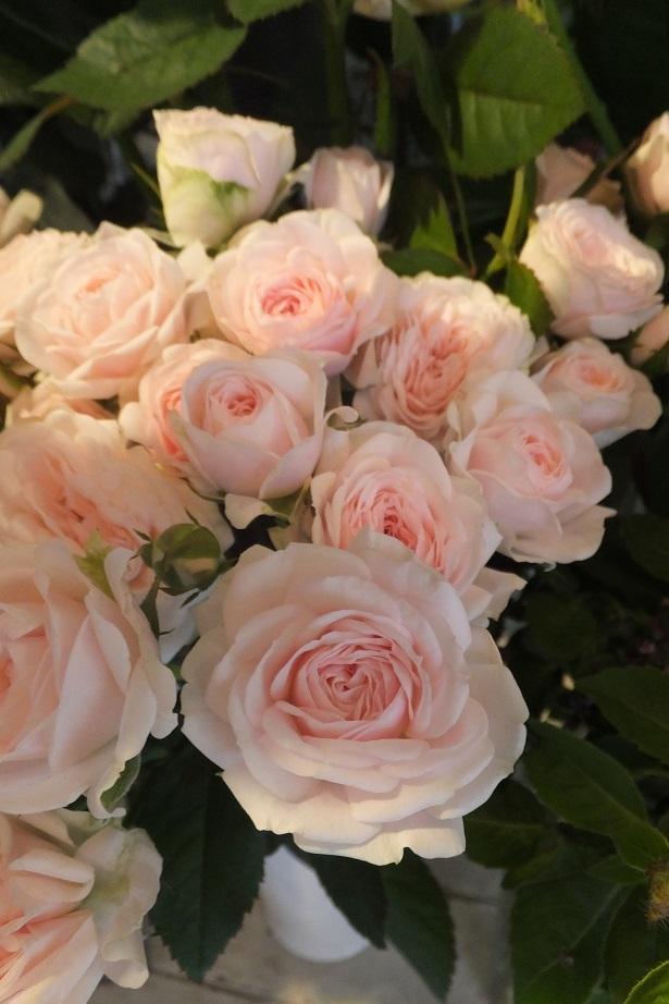 オークリーフ(秋の菊)_f0049672_12583885.jpg