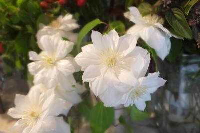 オークリーフ(秋の菊)_f0049672_12592108.jpg