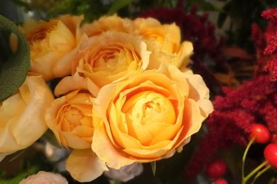 オークリーフ(秋の菊)_f0049672_12593303.jpg