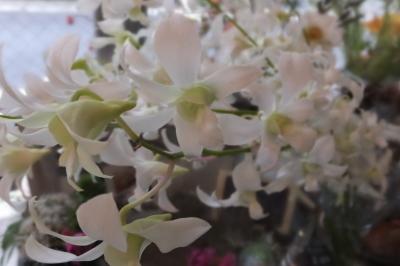オークリーフ(秋の菊)_f0049672_12595539.jpg