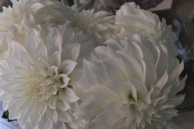 オークリーフ(秋の菊)_f0049672_13014549.jpg
