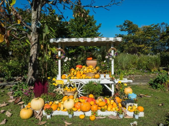 収穫の秋「じんぎすかん白樺」とハロウィンの「紫竹ガーデン」_f0276498_23450750.jpg