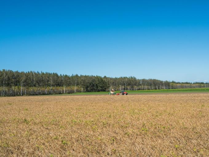 収穫の秋「じんぎすかん白樺」とハロウィンの「紫竹ガーデン」_f0276498_23454884.jpg