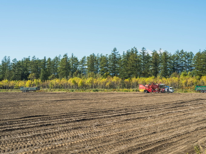 収穫の秋「じんぎすかん白樺」とハロウィンの「紫竹ガーデン」_f0276498_23462687.jpg