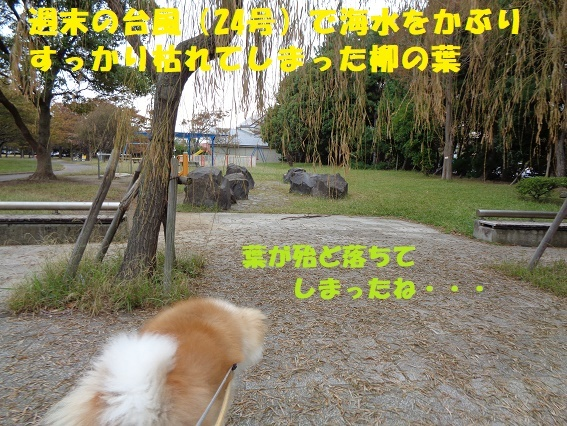 f0121712_07592077.jpg