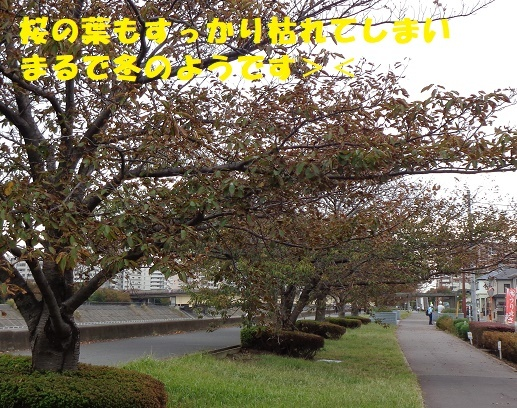 f0121712_08041976.jpg