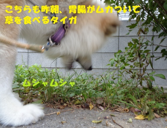 f0121712_09065591.jpg