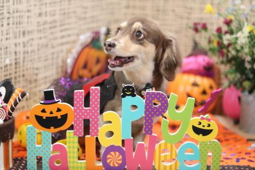 10月3日ご来店のワンちゃんです!!_b0130018_21425093.jpg