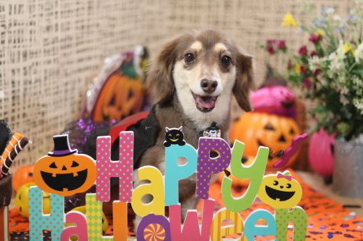 10月3日ご来店のワンちゃんです!!_b0130018_21431203.jpg