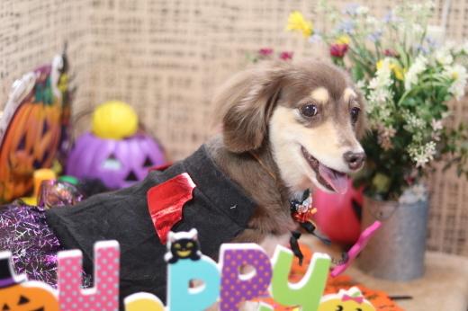 10月3日ご来店のワンちゃんです!!_b0130018_21435607.jpg