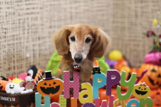 10月3日ご来店のワンちゃんです!!_b0130018_21453005.jpg