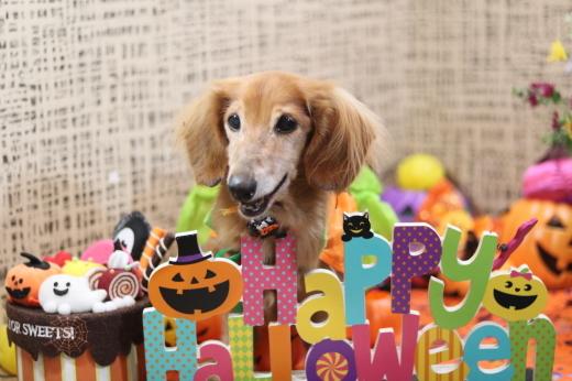 10月3日ご来店のワンちゃんです!!_b0130018_21460713.jpg